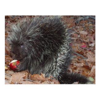 Stachelschwein und Apple Postkarte