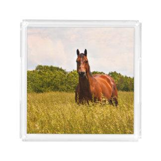 Stallions-PferdeServiertablett Acryl Tablett