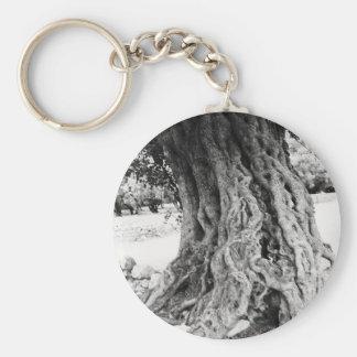 Stamm des alten Olivenbaums in Schlüsselanhänger