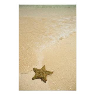 Starfish auf sandigem Strand, Gibbs Cay-Land und Photo Druck