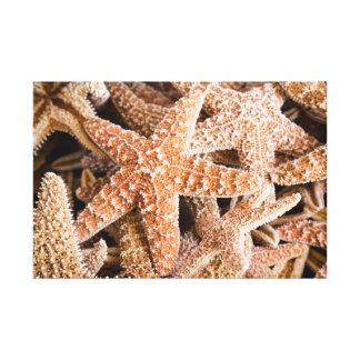 Starfish, die Leinwand gruppieren