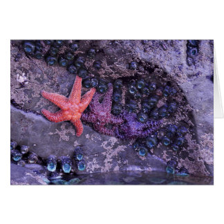 Starfish in den mehrfachen Farben am karminroten Karte