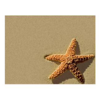 Starfish-tropische Postkarte