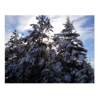 Starkes Schneefälle auf Kiefern Postkarte
