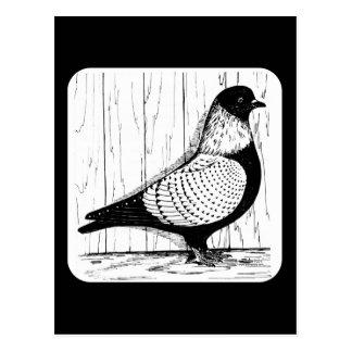 Starlings-Taube schnürte sich 1979 Postkarte