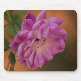 Staubige rosa Rose Mousepad