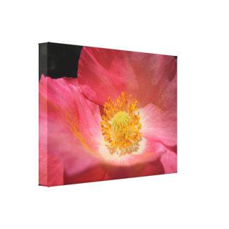 Staubiges Rosa farbige Mohnblume Leinwanddruck