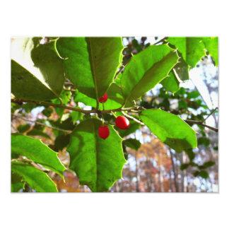 Stechpalme verlässt Natur des Feiertags-II Fotodruck