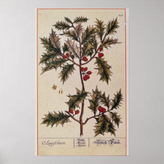 """Stechpalme von """"einem neugierigen Kräuter"""", 1782 Poster"""