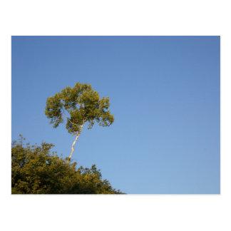 Stehen Sie heraus von der Mengen-Baum-Postkarte Postkarte