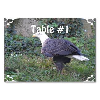 Stehender amerikanischer kahler Adler