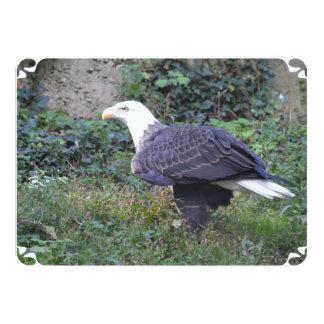 Stehender amerikanischer kahler Adler 12,7 X 17,8 Cm Einladungskarte