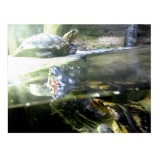 Steigende Schildkröten Postkarte
