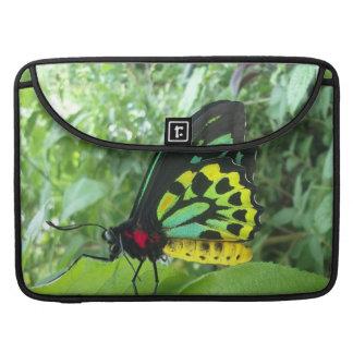 Steinhaufen Birdwing Schmetterling w/poem Sleeve Für MacBook Pro