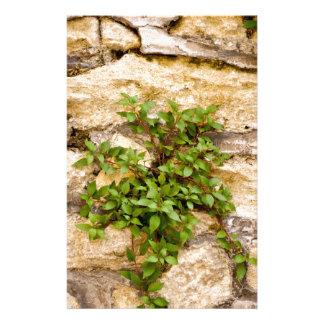 SteinPflanzen Briefpapier