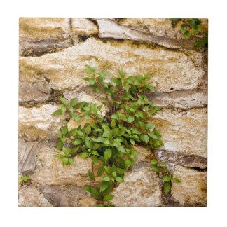 SteinPflanzen Keramikfliese