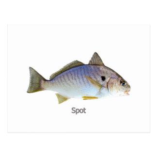 Stellen-Fisch-Foto Postkarte