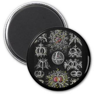 Stephoidea auf schwarzem Hintergrund Runder Magnet 5,1 Cm