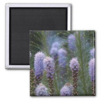 Stern-Blume Quadratischer Magnet
