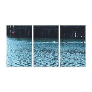 Sternplatten-Leinwand-Druck des seelöwe-drei Leinwanddruck