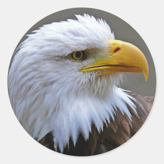 Sticker Aufkleber Weißkopfadler Adler
