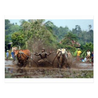 Stier, der im Schlamm läuft Postkarte