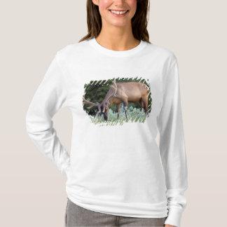 Stier-Elche mit den Geweihen im Samt herein weiden T-Shirt