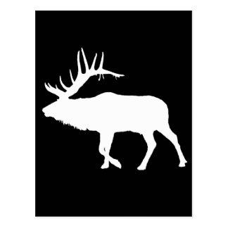 Stier-Elchweiß Postkarte