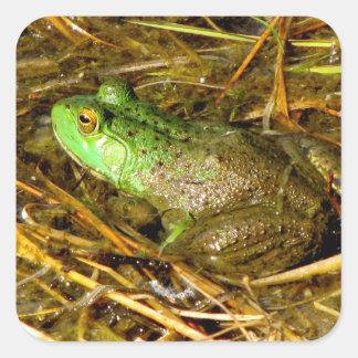 Stier-Frosch-Aufkleber Quadratischer Aufkleber