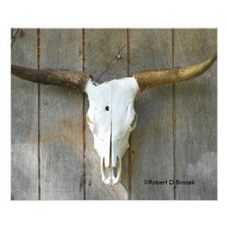 Stier-Schädel auf einer Wand nahen hohen Fotodruck