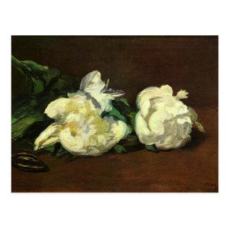 Stillleben, weiße Pfingstrose durch Edouard Manet Postkarte