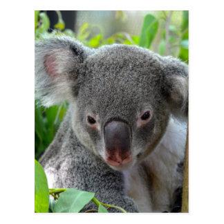Stillstehen, glücklicher Koala Postkarte