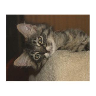 Stillstehende Kätzchen-Holz-Leinwand Holzdruck