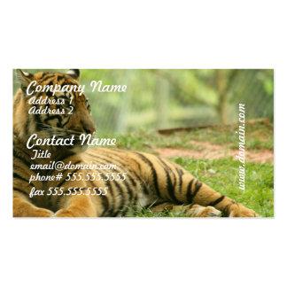 Stillstehende Tiger-Visitenkarten