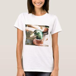 Stockente Drake T-Shirt