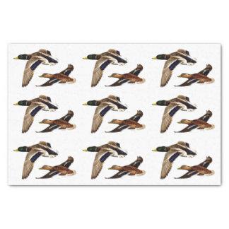 Stockente duckt U-Auswahl Hintergrund-Farbe Seidenpapier