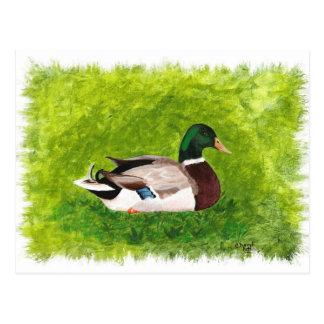 Stockenten-Ente, die in den Gras-Postkarten sitzt Postkarte