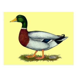 Stockenten-Ente Drake Postkarte