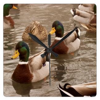Stockenten-Enten-Foto-Wand-Uhr Quadratische Wanduhr