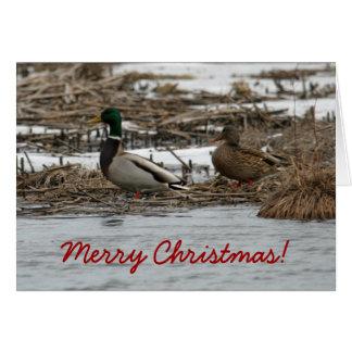 Stockenten-Enten-Weihnachtskarte Karte