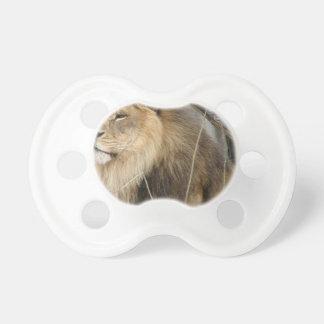 Stoischer Löwe, der weg den Abstand untersucht Schnuller