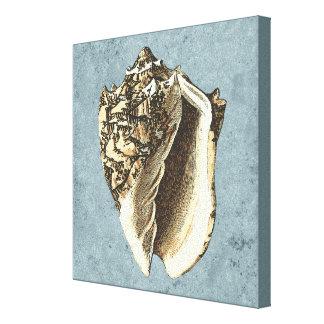 Stonewashed Tritonshorn-Muschel Leinwanddruck