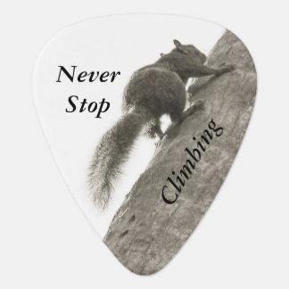Stoppen Sie nie, Schwarzweiss-Eichhörnchen zu Plektrum