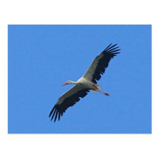Storch im Flug Postkarte