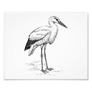 Storch-Vogel-Schwarzweiss-Cartoon Photographischer Druck