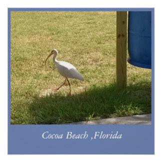 Störche des Kakao-Strandes, Florida Poster
