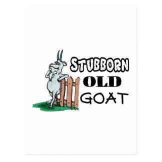Störrische alte Ziege Postkarte