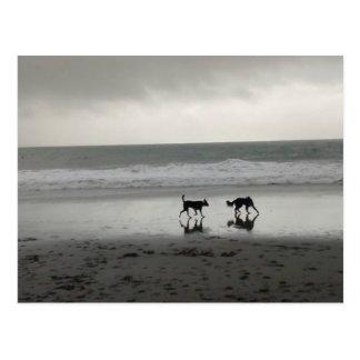 Strand-Hunde Postkarte
