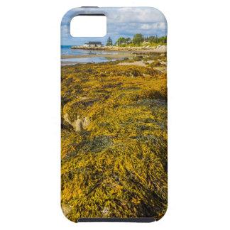 Strand-Meerespflanze iPhone 5 Schutzhülle