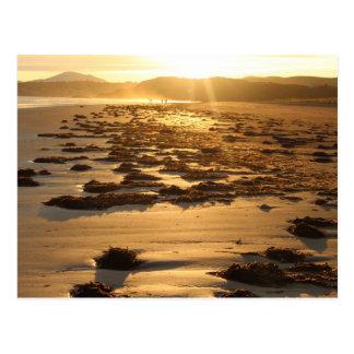 Strand mit Meerespflanze-niedrigem Winkel Postkarte